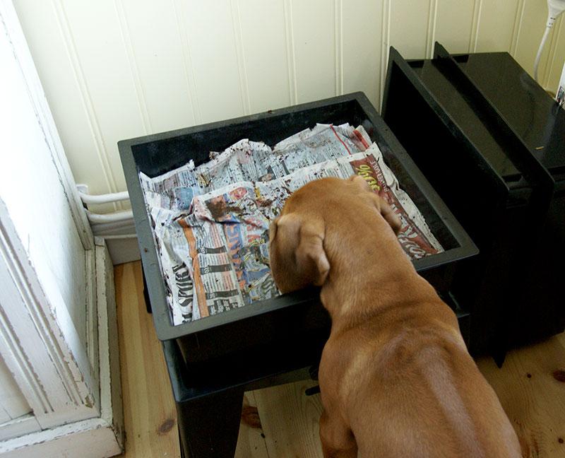 Hund som sniffar i maskkomposten