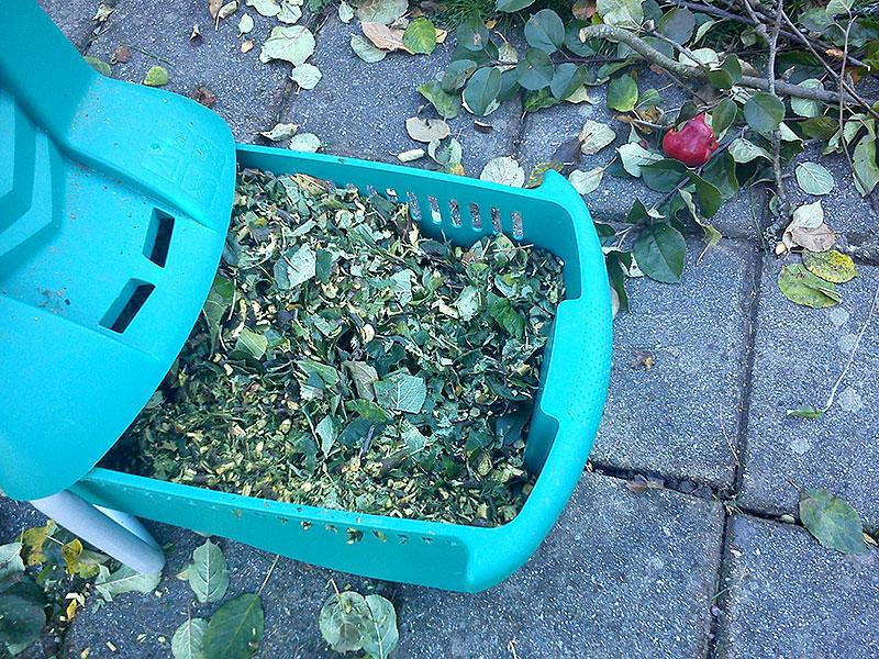 FInfördelat trädgårdsavfall kan användas för täckning