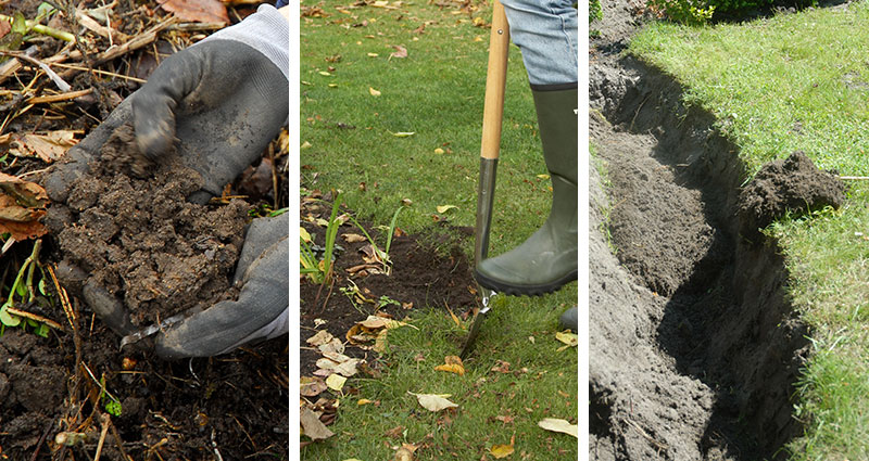 Plantering av häckväxter