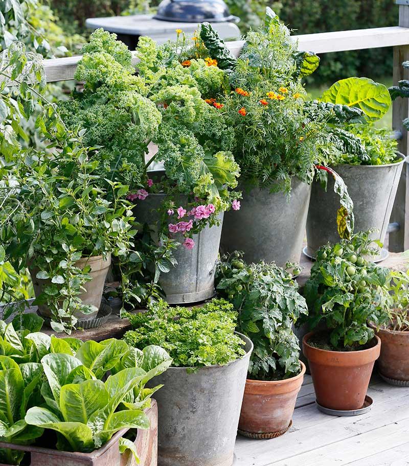 Odling av ätbara växter i kruka på balkong