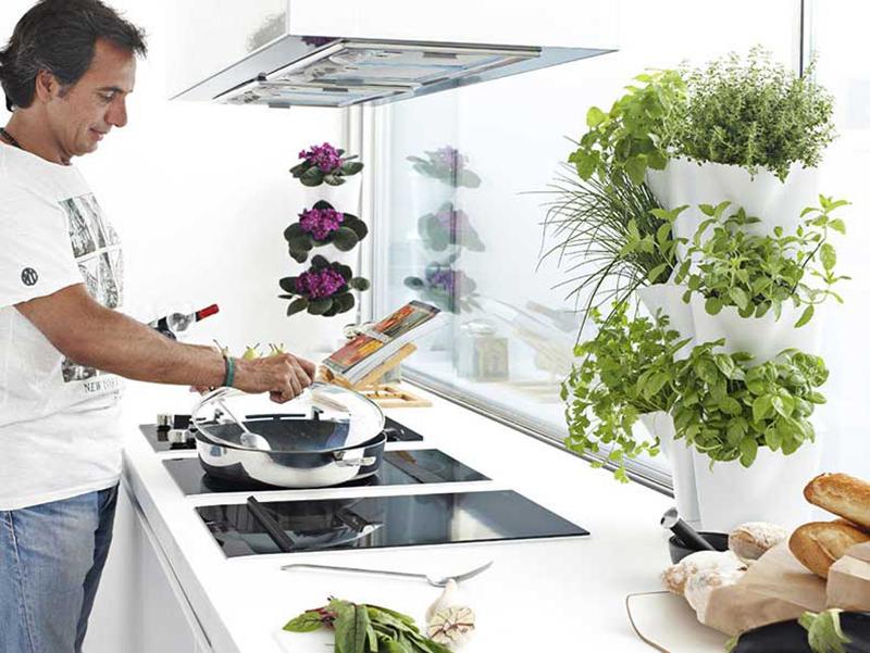 Odling av ätbara bladgrönsaker och kryddörter inomhus