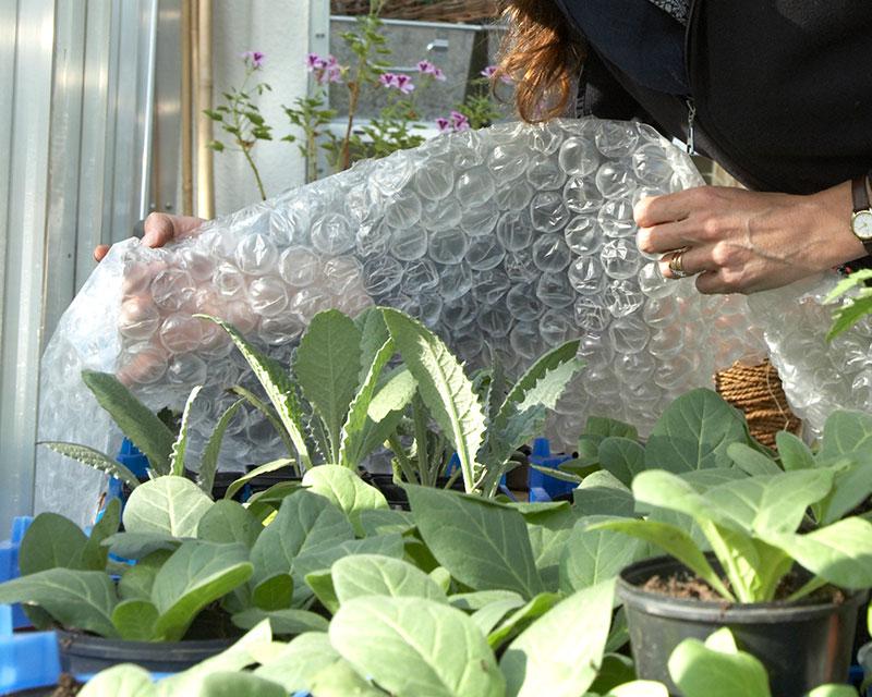 Bubbelplast som skydd mot frost
