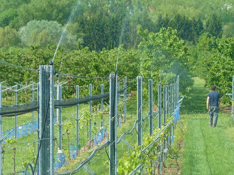 Frostskydd med bevattning av vinodling