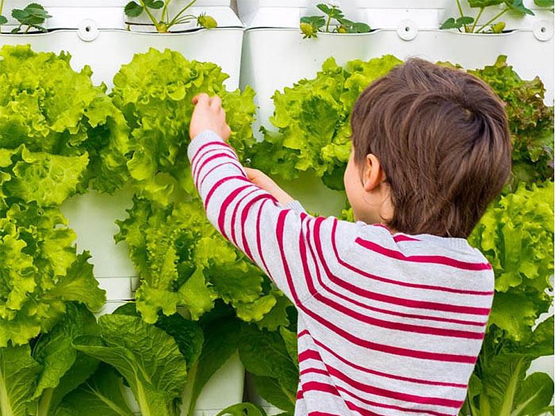 Köksväxter som trivs att odlas i växtvägg utomhus