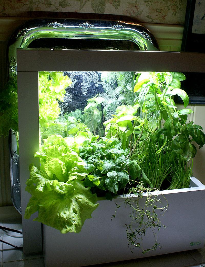 Odling av krukodlade krukor inomhus i odlingssation för hydrokultur