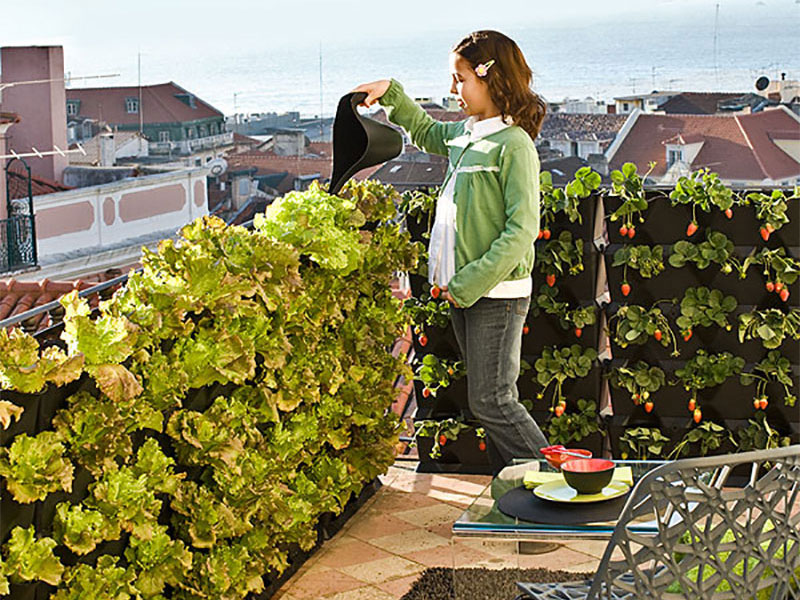 Väggoding med sallat och jordgubbar på balkongen