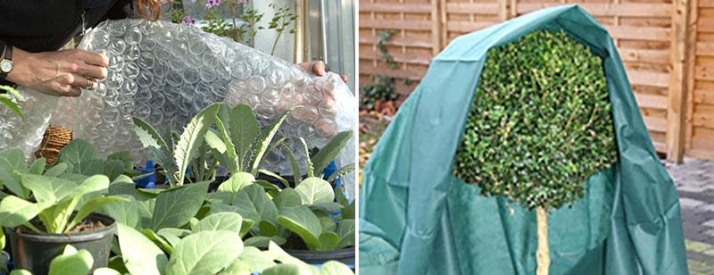 bubbelplast och odlingshuva mot kyla