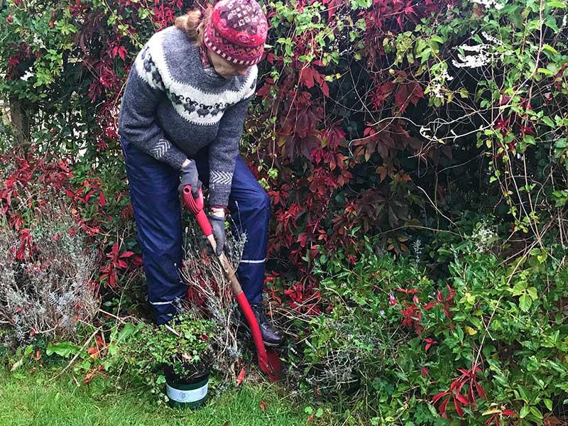 Höstplantering i trädgård