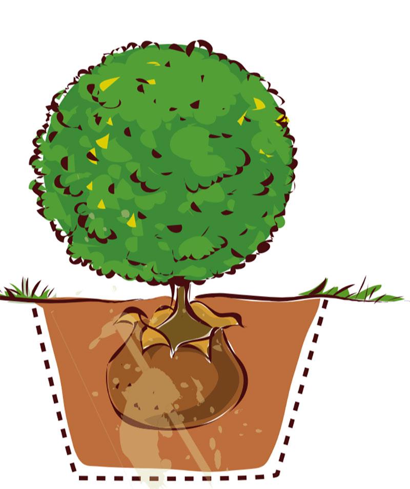Rätt planteringsnivå för buskar, träd och klätterväxter