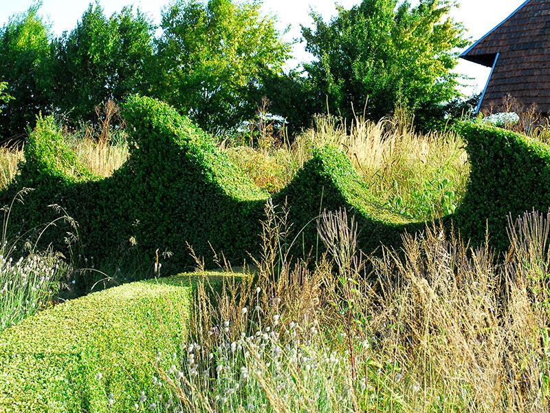 formklippt häck av buxbom vid Jardin Plume Frankrike