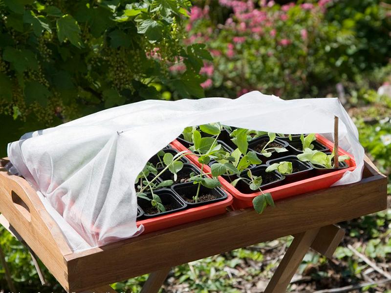 Avhärdning av småplantor med fiberduk