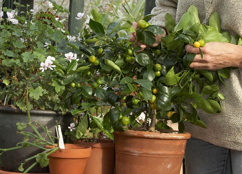 krukväxter med problem