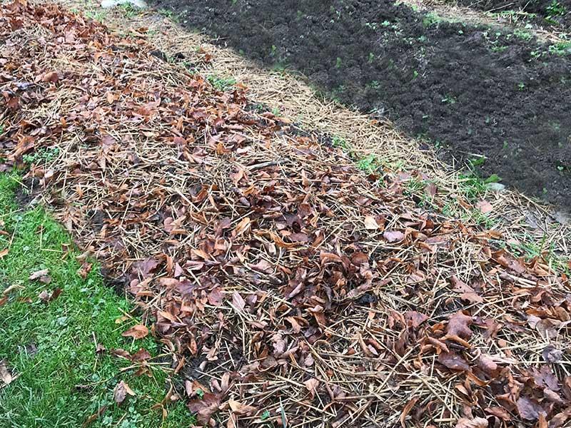Täcke av löv över odlingsbädd på hösten