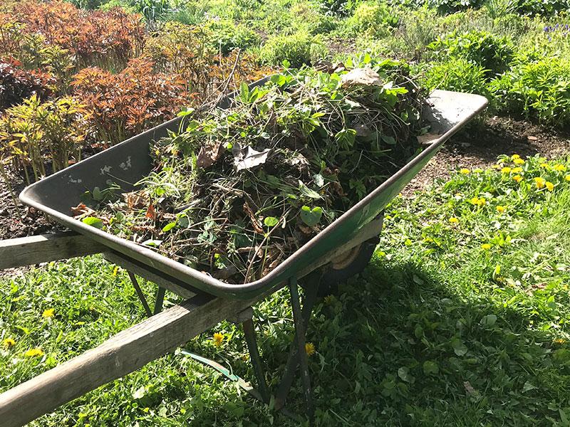 Växtrens från trädgården i skottkärra