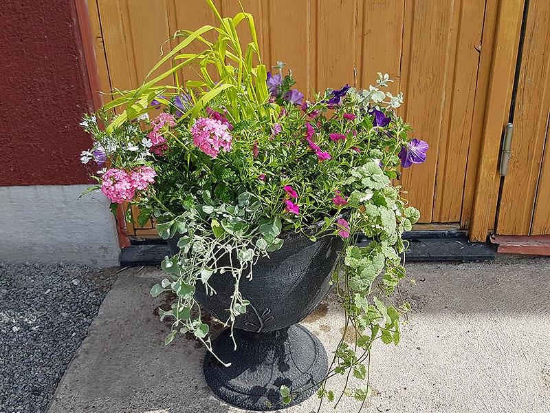 Mix av olika sommarblommor i stor urna