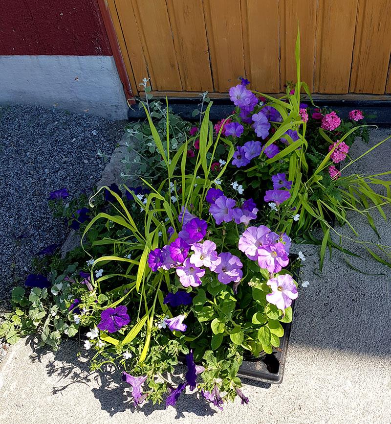 Sommarblommor och gräs i olika färger