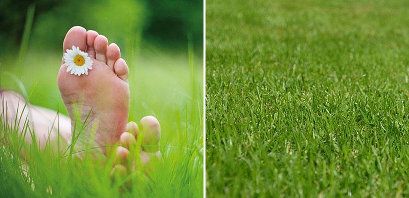 Torktålig gräsmatta