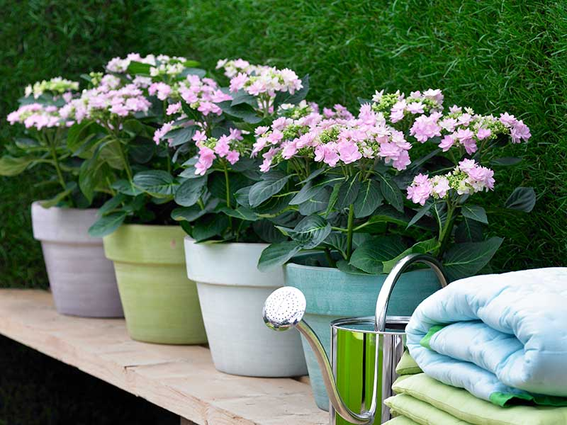Utekrukor av glacerad keramik till hortensia