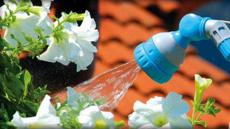 bevattning av sommarblommor vid plantering