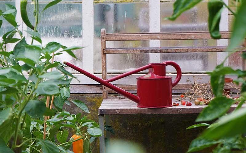Haws vattenkanna i växthus
