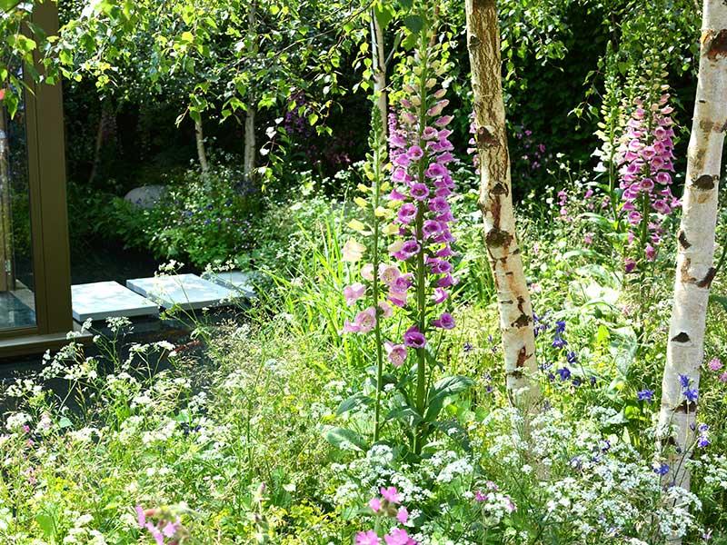 Mångfald i trädgård