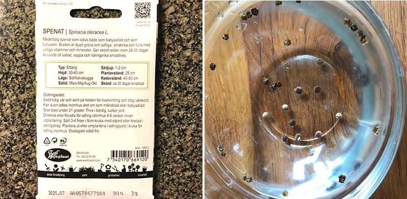 Fröpåse spenat och stöpning av luktärtsfrön