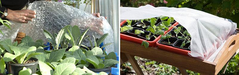 skydd av småplantor vid avhärdning
