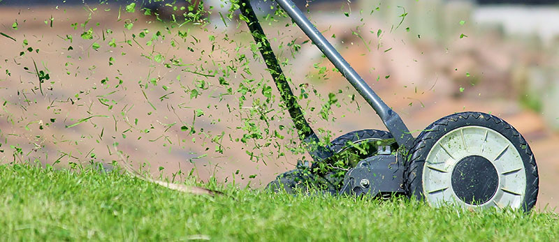 gräsklipp som gödningsmedel