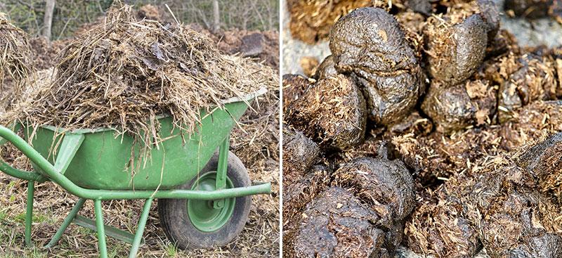 Djurgödsel för trädgårdsodling