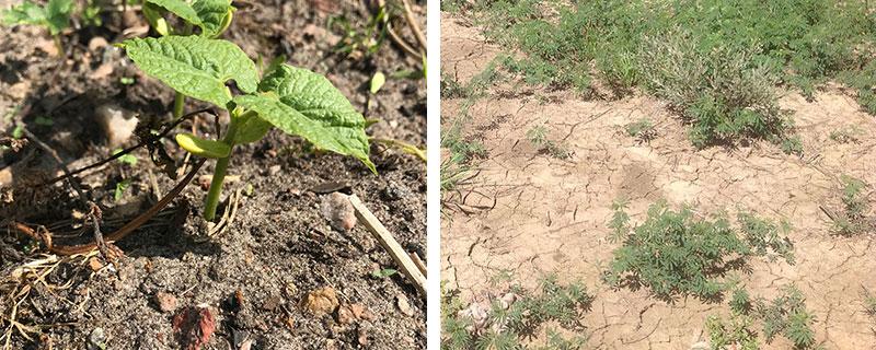 Skillnad på sandjord och lerjord