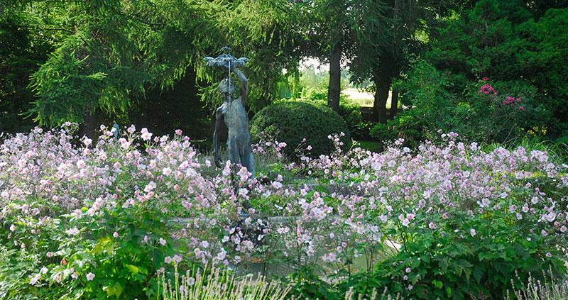 Rabatt med blommande höstanemoner