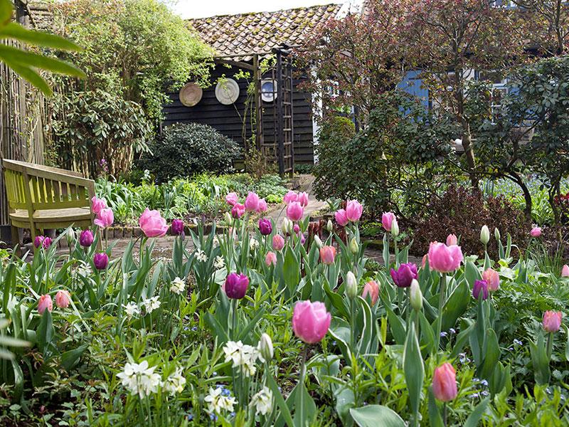 Vår i trädgård med olika rum