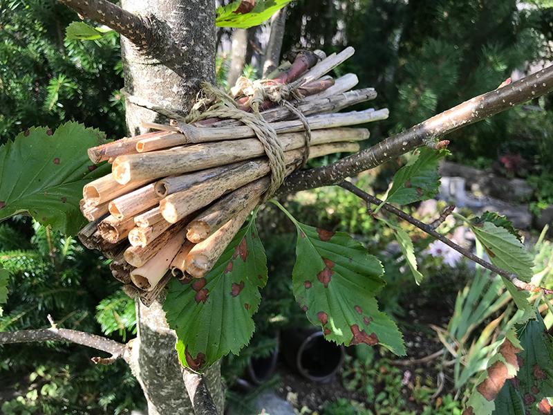 Enkelt insektshotell av bambupinnar