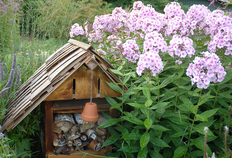 Flox och insektshotell i trädgård