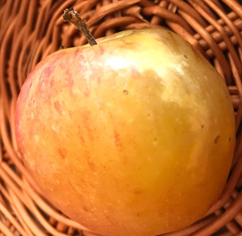 Glasighet hos äpple