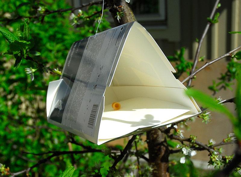 Feromonfälla mot plommonvecklare i fruktträd