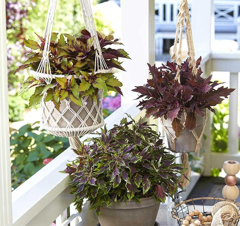 palettblad i ampel och kruka på balkong