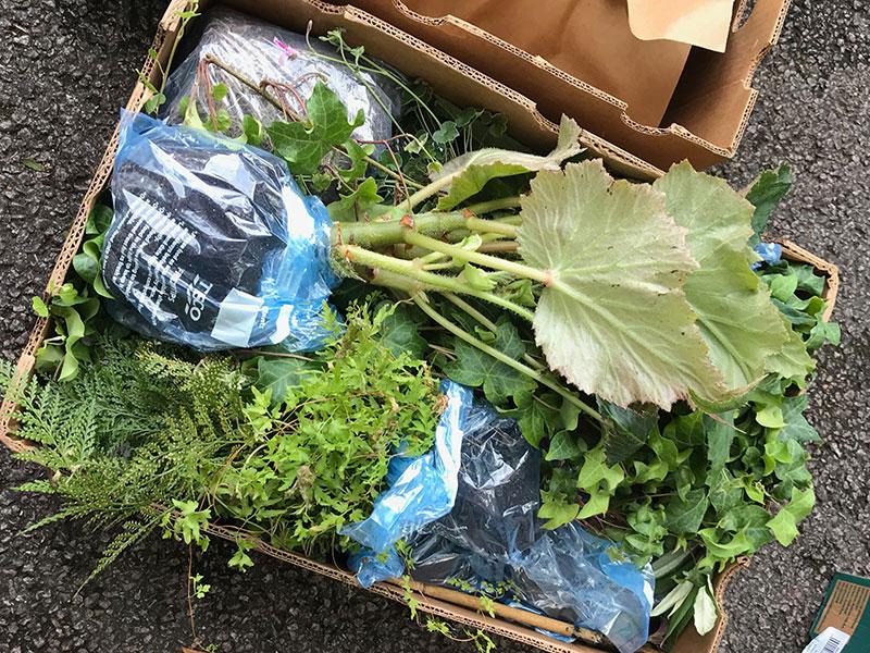 Sticklingar och plantor nedpackade för hemresa från utlandet