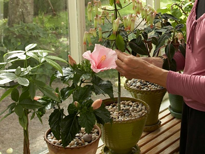 ohyra på krukväxter på fönsterkarmen