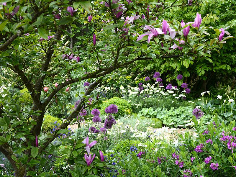 Rådjursfri trädgård med växter som rådjur ratar