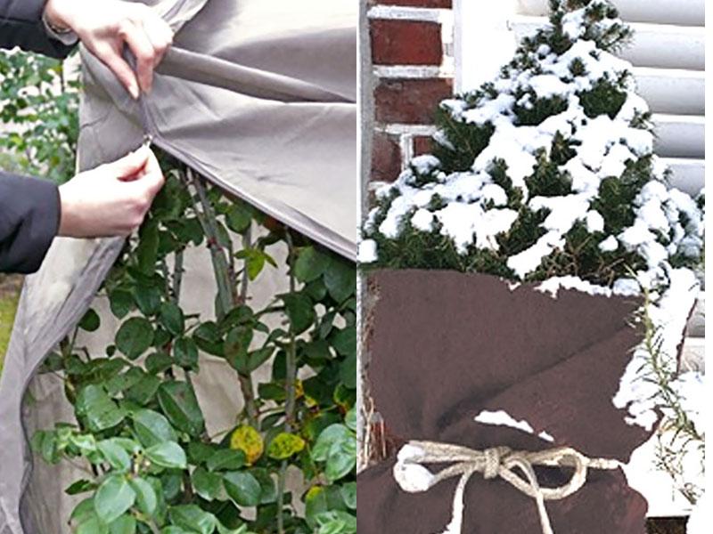 Skydd av växter i utekruka på vintern