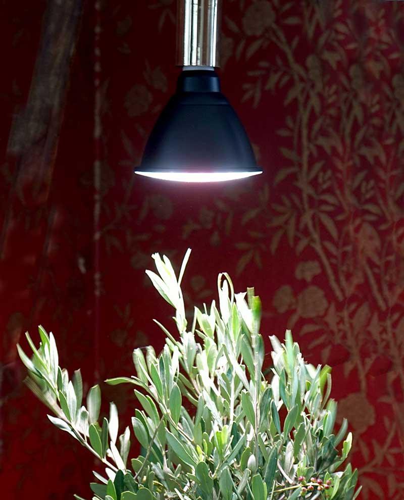 Växtlampa Primula för övervintring