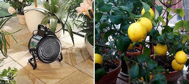 Värmefläkt i uterum för övervintring av Medelhavsväxter