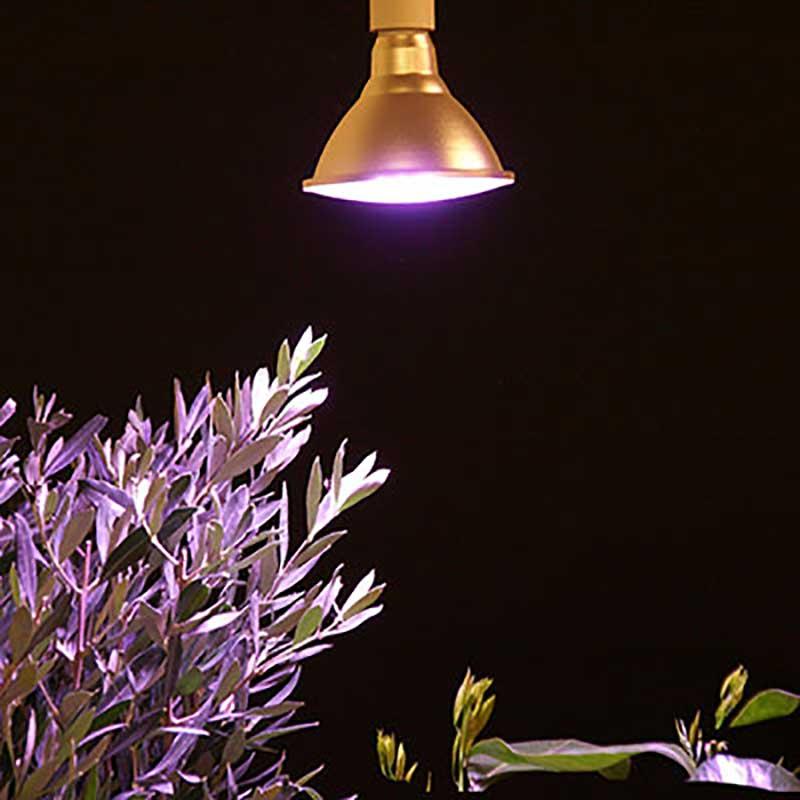 Växtlampa för övervintring av Medelhavsväxter i mörker