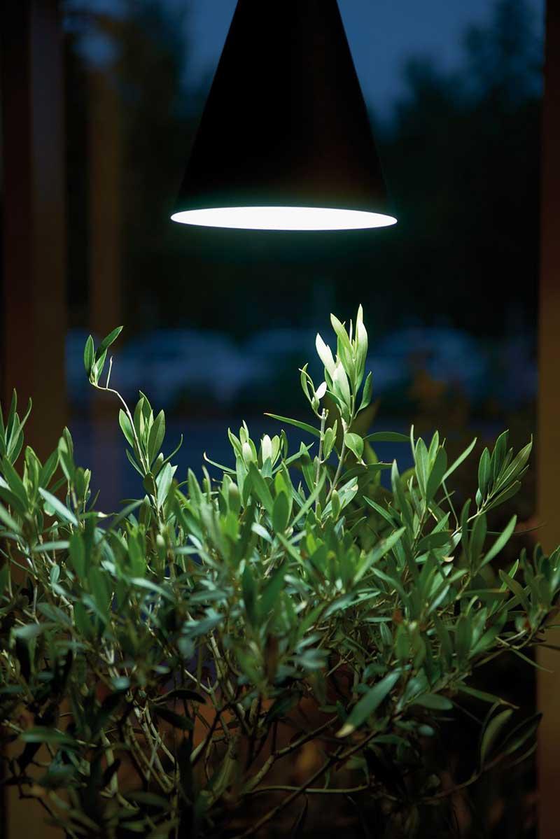 Växtlampa till olivträd inomhus på vintern
