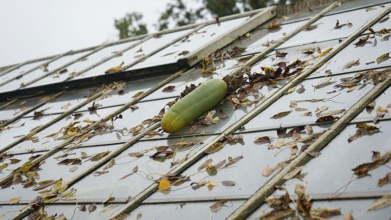 Växthustak på hösten
