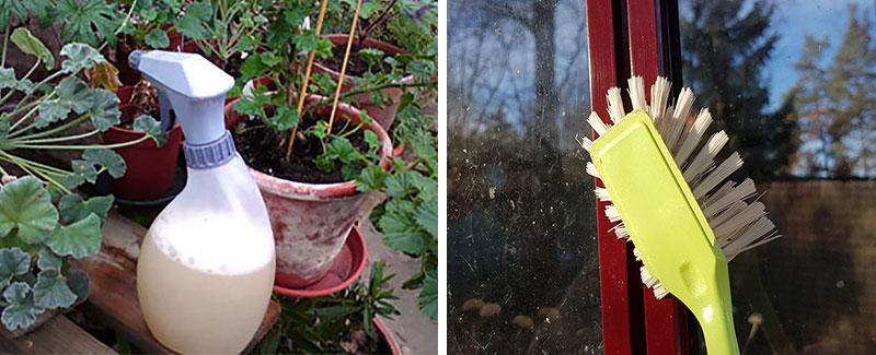 Rengöringsmedel och diskborste för sanering av växthus