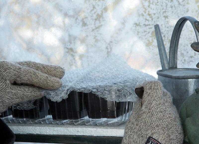 Vintersådd av perennfrön i växthus