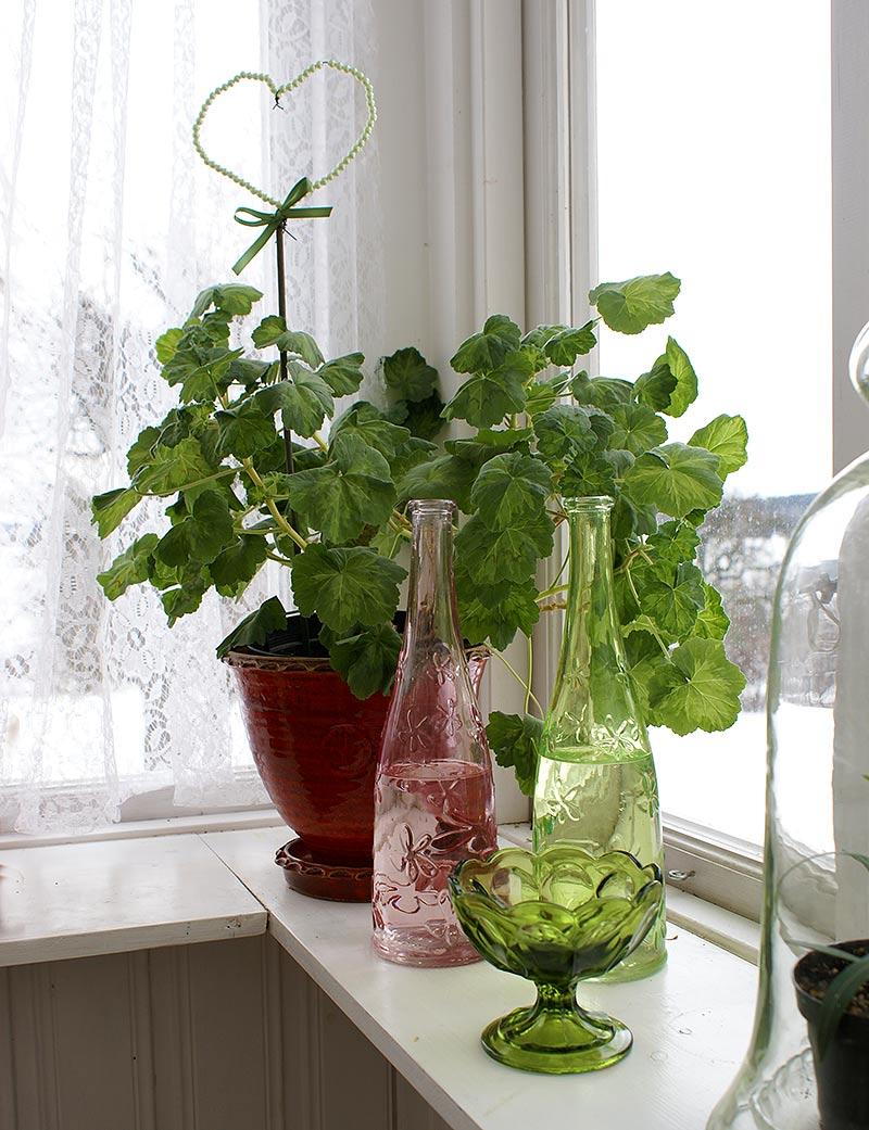 Ökad luftuktighet för växter med vatten i flaskor