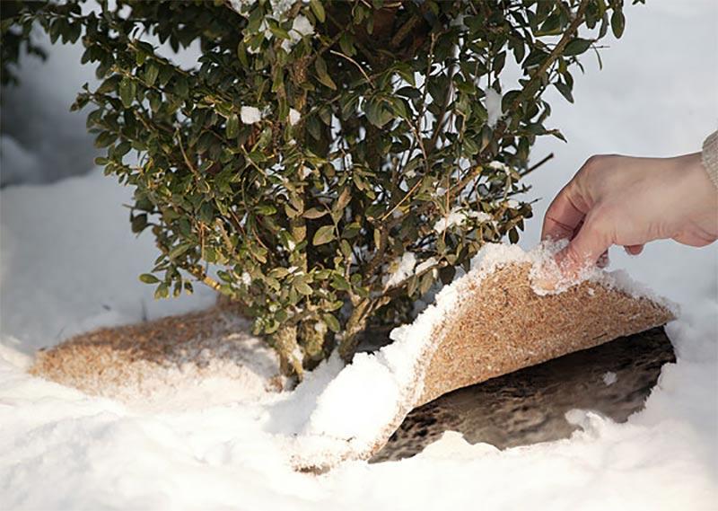 Kokosmattan skyddar känsliga rötter från markfrost